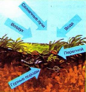 Почва Образование и состав Природоведение Реферат доклад  Образование почвы